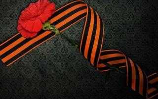 Бесплатные фото гвоздика, лепестки, красные, стебель, георгиевская лента, 9 мая