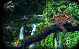 Бесплатные фото джунгли,леопард,дерево,река,водопад,попугаи,рисунок