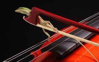 Бесплатные фото скрипка,струны,смычок,ящерица,зеленая,хвост