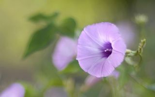 Фото бесплатно цветок, колокольчик, лепестки