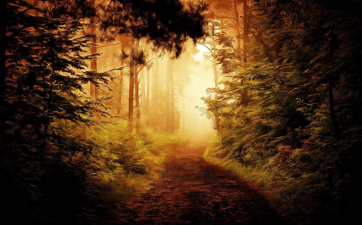 Фото бесплатно осень, лес, деревья, дорога, туман, art, рендеринг