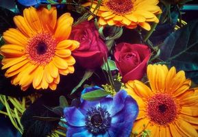 Photo free gerbera, roses, flowers