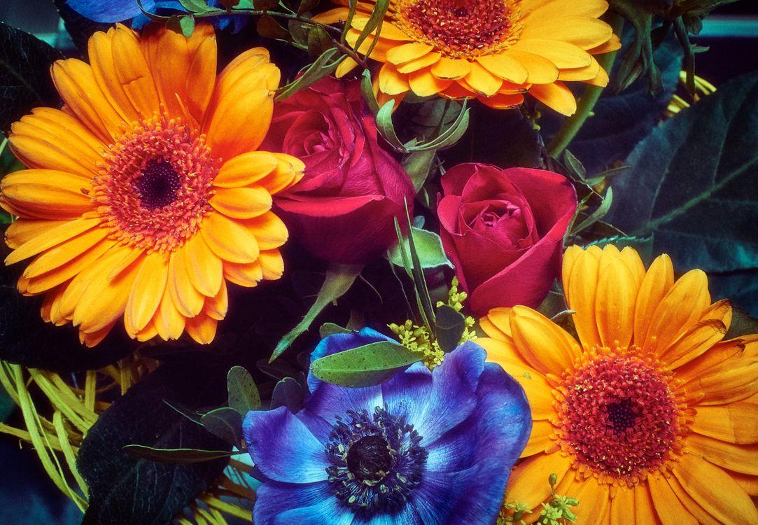 Фото бесплатно герберы, розы, цветы - на рабочий стол