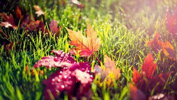 Красные листья, трава, роса, капли воды