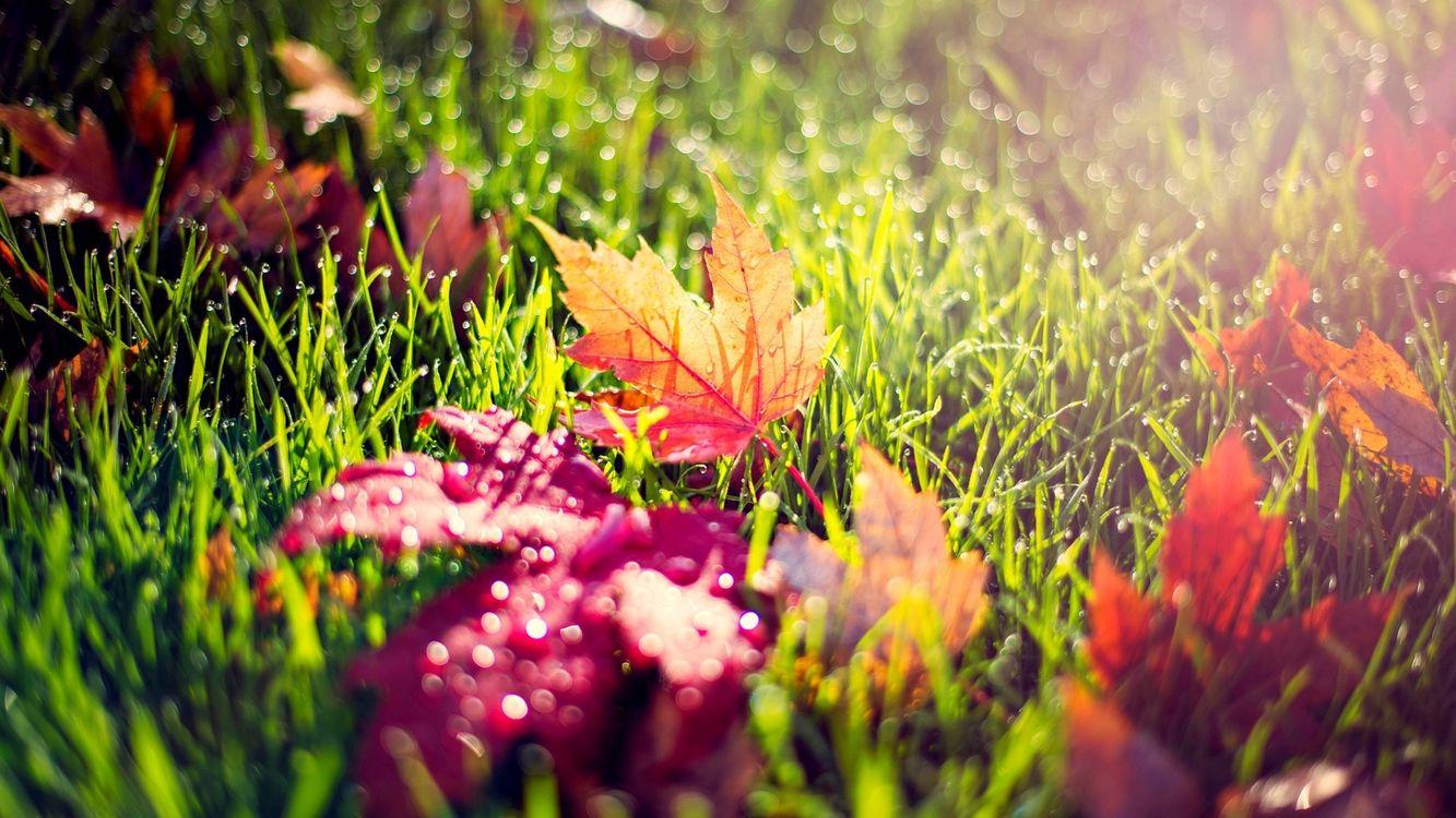 Фото бесплатно Красные листья, трава, роса, капли воды, макро