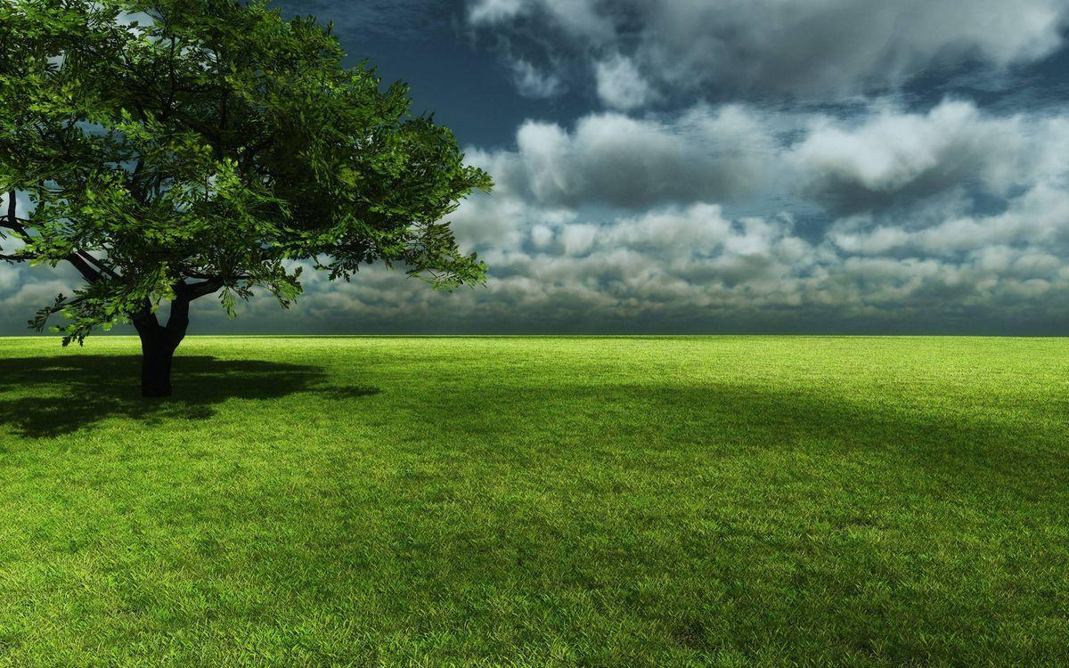 Фото бесплатно поле, трава, дерево, крона, тень, горизонт, небо, облака, пейзажи