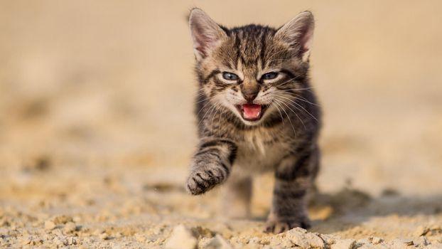 Бесплатные фото котенок,пляж,песок