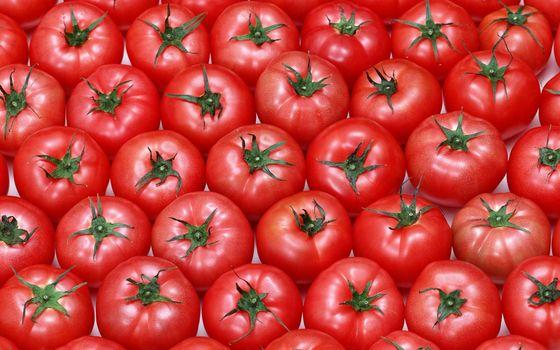 Фото бесплатно помидоры, растительное, красный