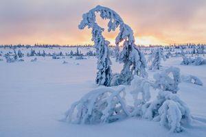 Бесплатные фото зима, снег, сугробы, деревья, пейзаж, закат