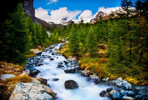 Заставки Ручей в лесу в середине Альп, речка, горы