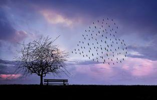 Фото бесплатно закат, поле, дерево, силуэты, art