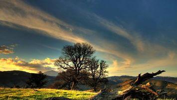 Бесплатные фото горы,трава,коряга,деревья,небо,облака