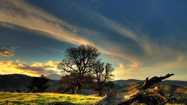 Фото бесплатно горы, трава, коряга