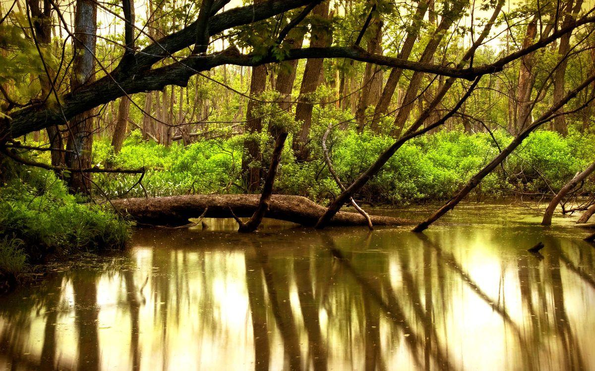 Фото бесплатно водоем, коряги, кустарник, деревья, заросли, природа