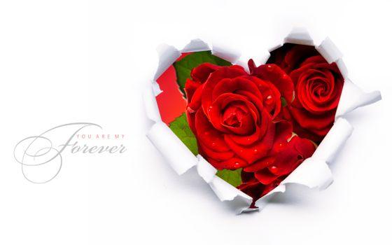 Розы на 8 марта и рваная бумага в виде сердечка · бесплатное фото