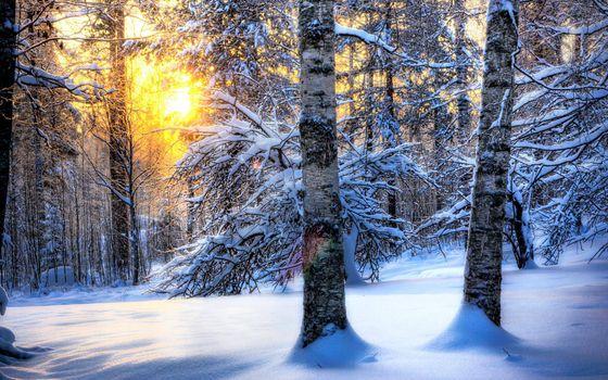 Фото бесплатно зимний лес, березки, сугробы, солнце