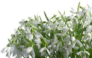 Заставки букет, цветочки, лепестки, белые, стебли, листья, зеленые