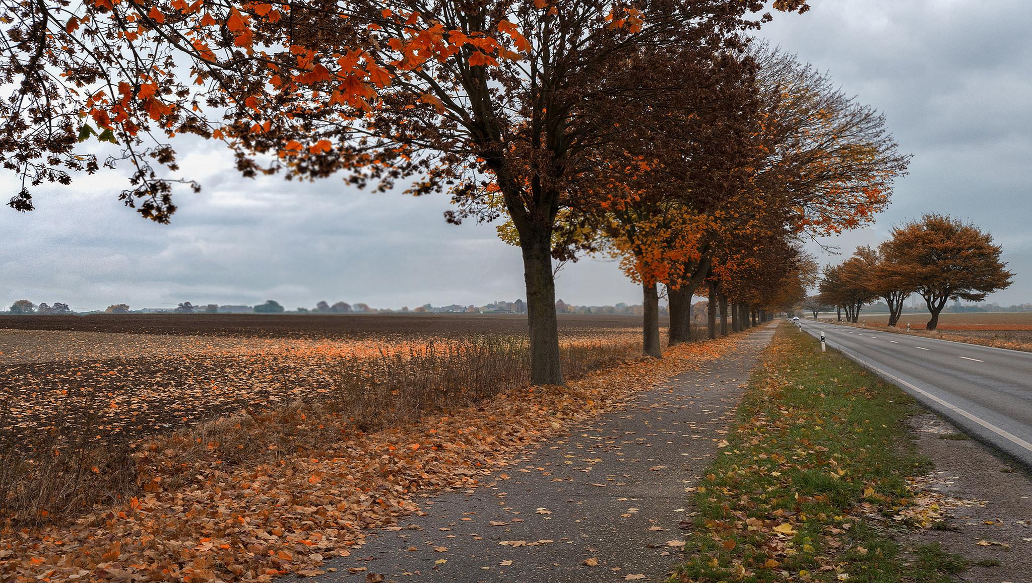 обои осень, поле, деревья, дорога картинки фото