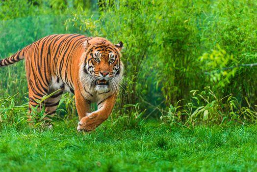 Photo free green grass, predator, green foliage