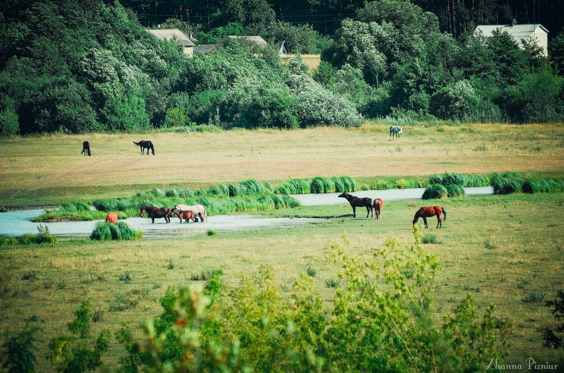 Обои лошади, пастбище картинки на телефон