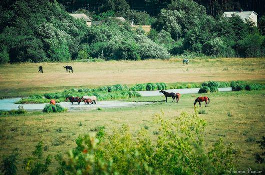 Photo free horses, pasture
