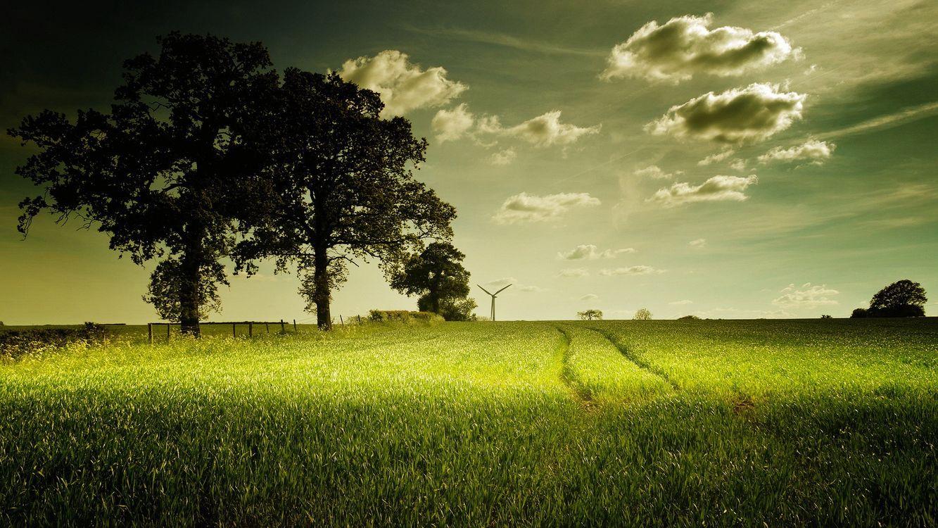 Фото бесплатно поле, трава, деревья, небо, пейзажи