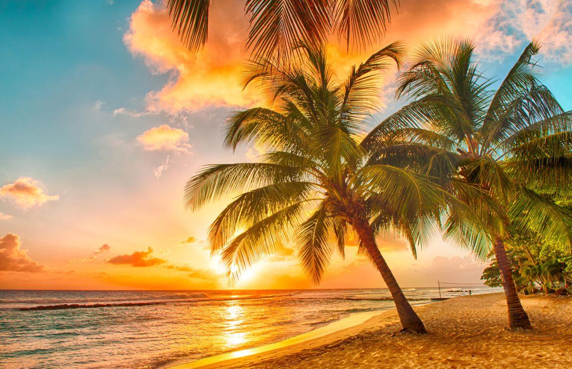 Фото бесплатно закат, море, пальмы, пляж, пейзажи