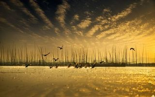 Бесплатные фото озеро,стая,гуси,крылья,полет,небо