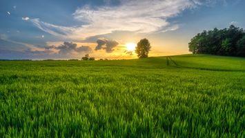 Бесплатные фото закат,поле,трава,деревья,небо,природа,пейзаж