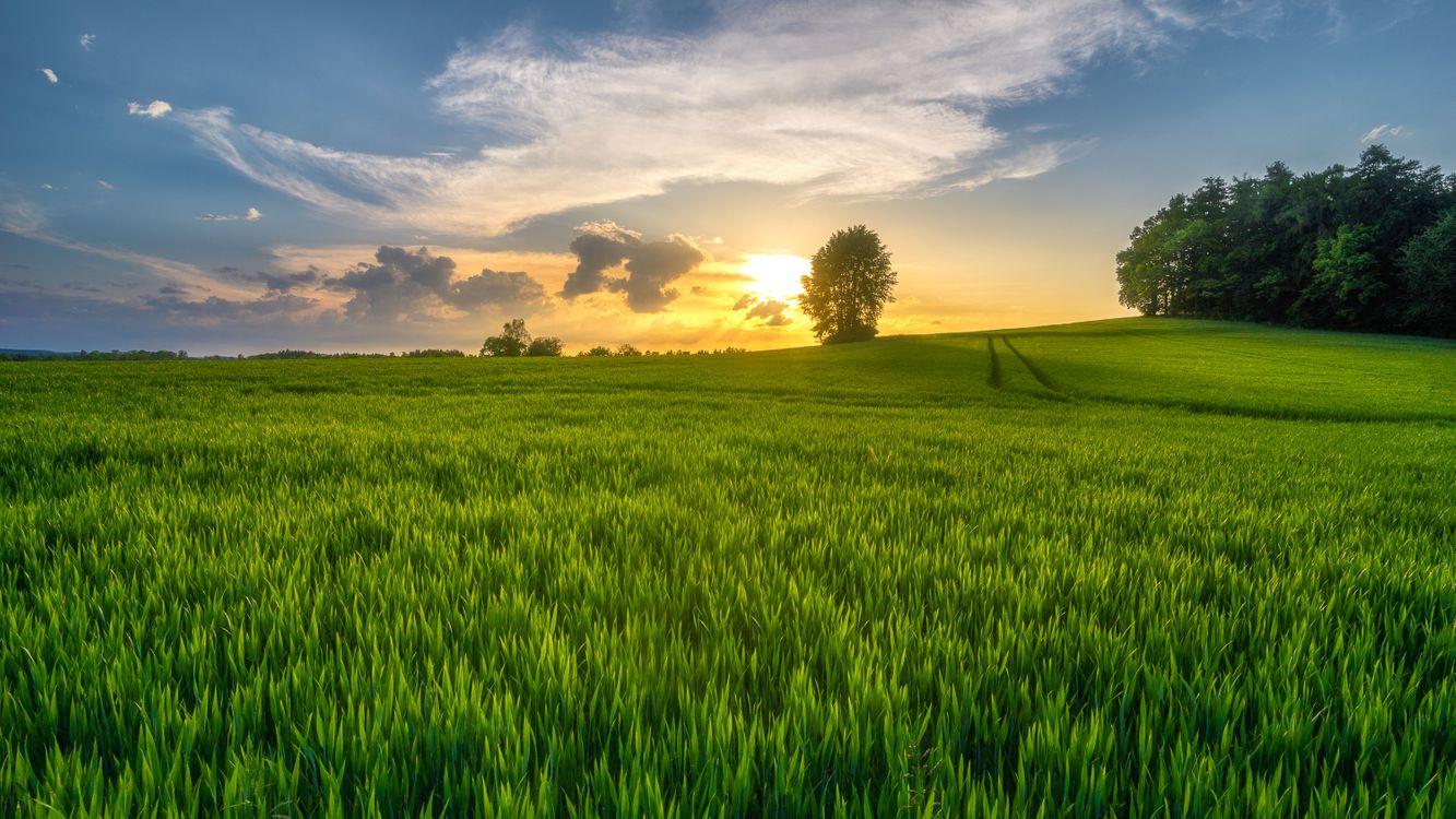 Фото бесплатно закат, поле, трава, деревья, небо, природа, пейзаж, пейзажи