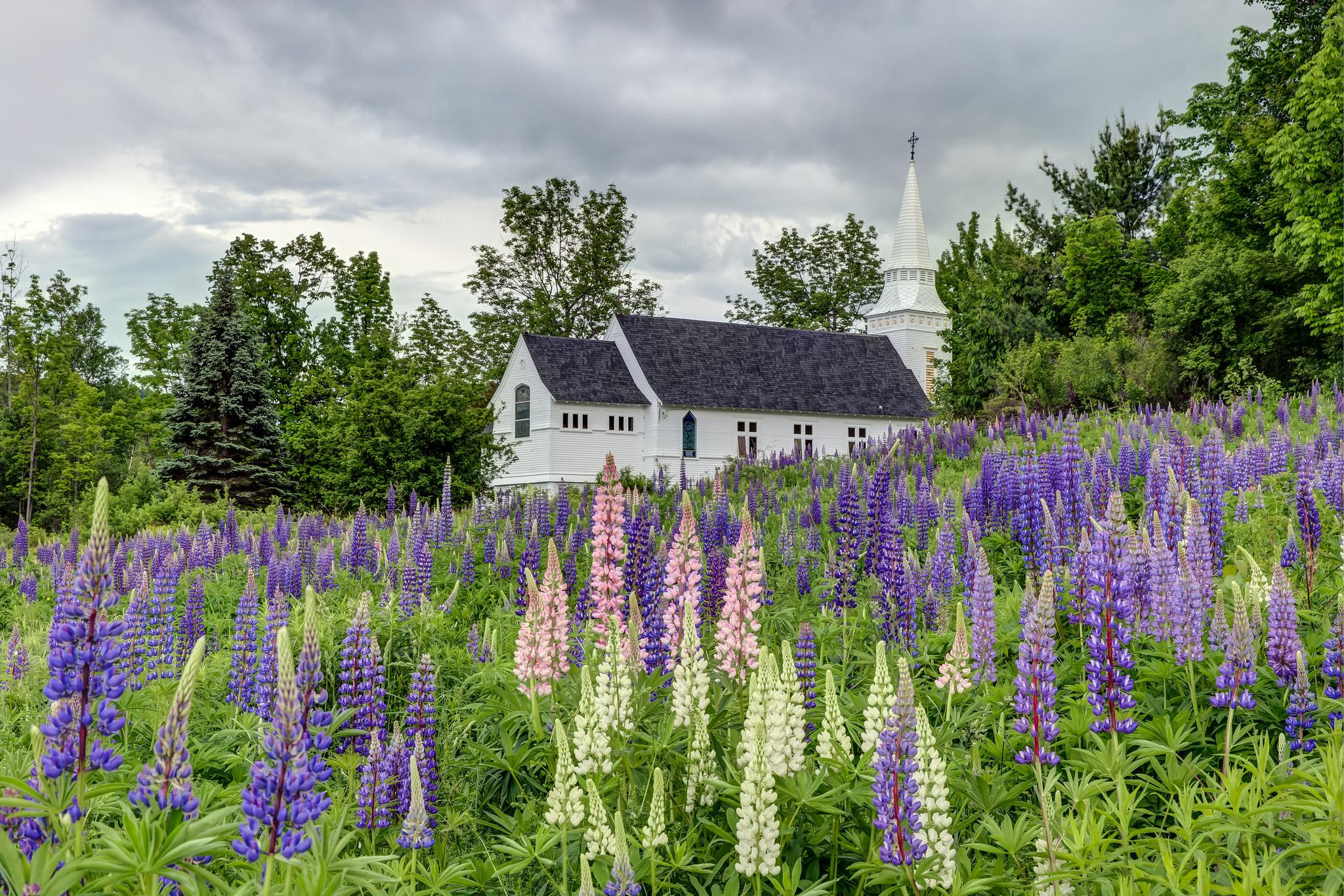 обои Нью-Гемпшир, Новая Англия, поле, цветы картинки фото