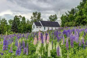 Бесплатные фото Нью-Гемпшир,Новая Англия,поле,цветы,люпин,деревья,церковь