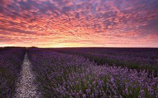 Бесплатные фото поле,цветы,лаванда,грядки,небо,облака