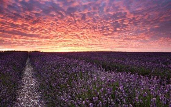 Photo free flowers, field, beds