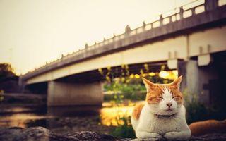 Бесплатные фото кот,спит,морда,лапы,шерсть,река,мост