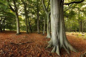Заставки лес,деревья,природа
