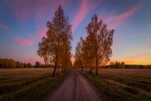 Бесплатно дорога, деревья - фото красивые
