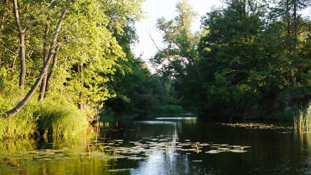 Заставки река, кувшинки