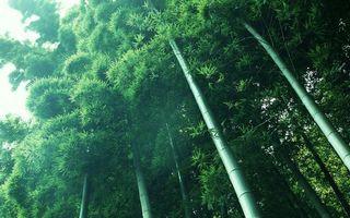 Бесплатные фото трава,бамбук,роща,стволы,листья,зелень