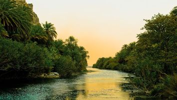 Photo free tropics, palms, jungle