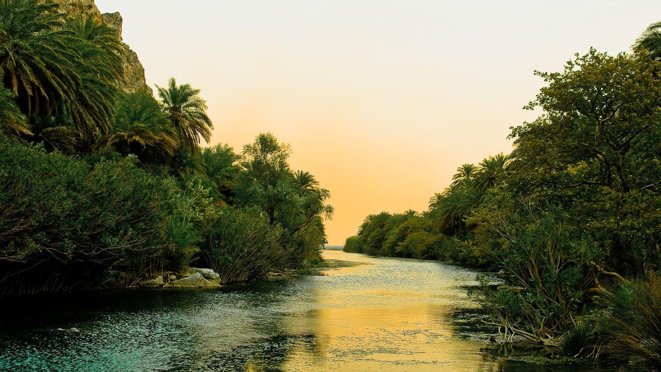 Фото бесплатно тропики, пальмы, джунгли, река, течение, небо - на рабочий стол