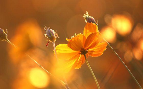 Фото бесплатно цветок, лучи солнца