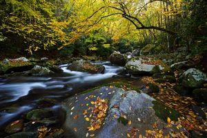 Бесплатные фото осень,река,лес,деревья,камни,природа