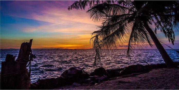 Photo free sunset, sea, palm