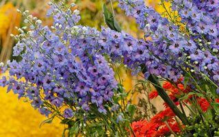 Фото бесплатно листья, клумба, цветы