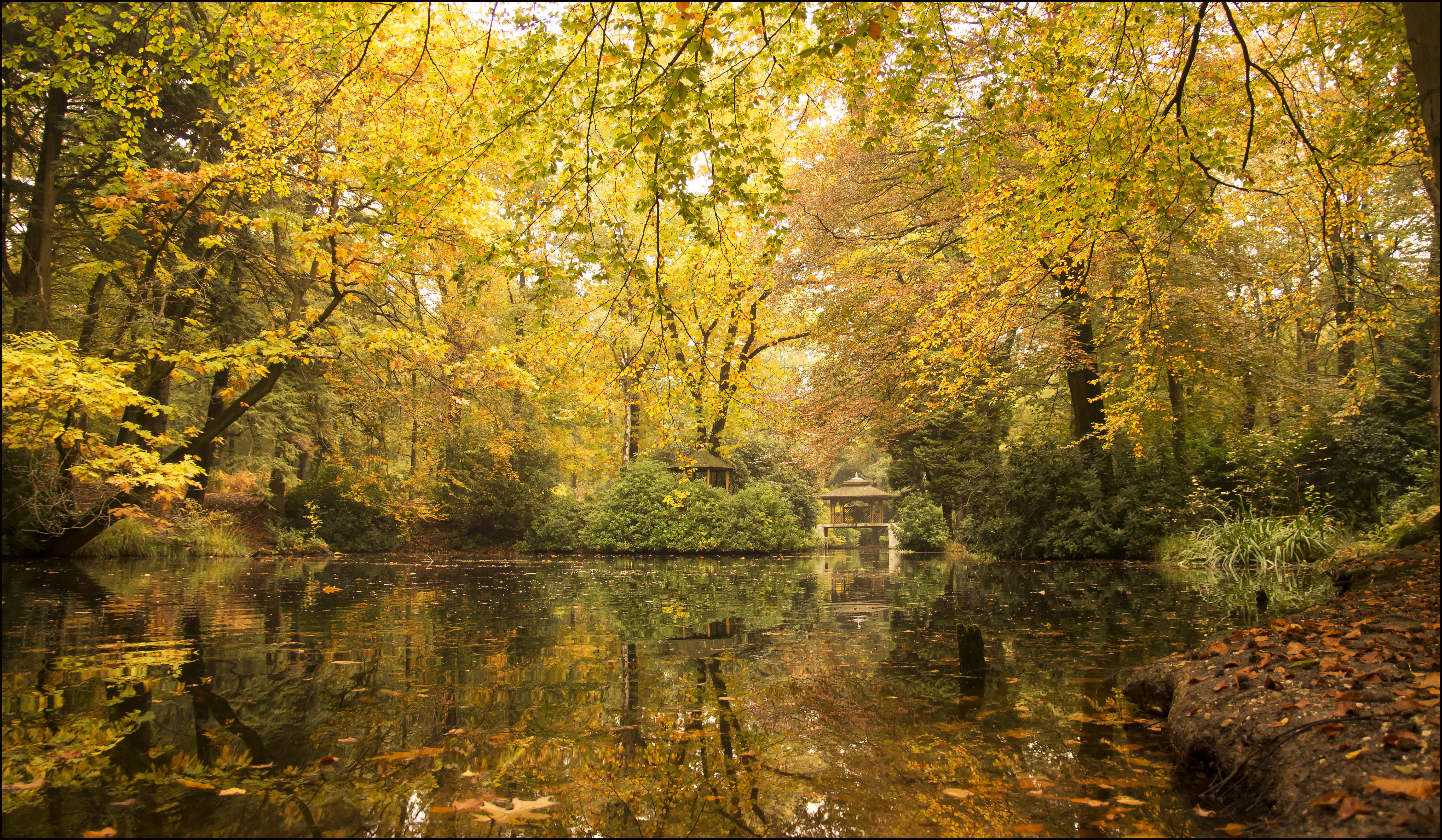 обои осень, водоём, лес, парк картинки фото