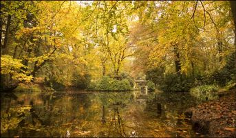 Photo free autumn, pond, forest