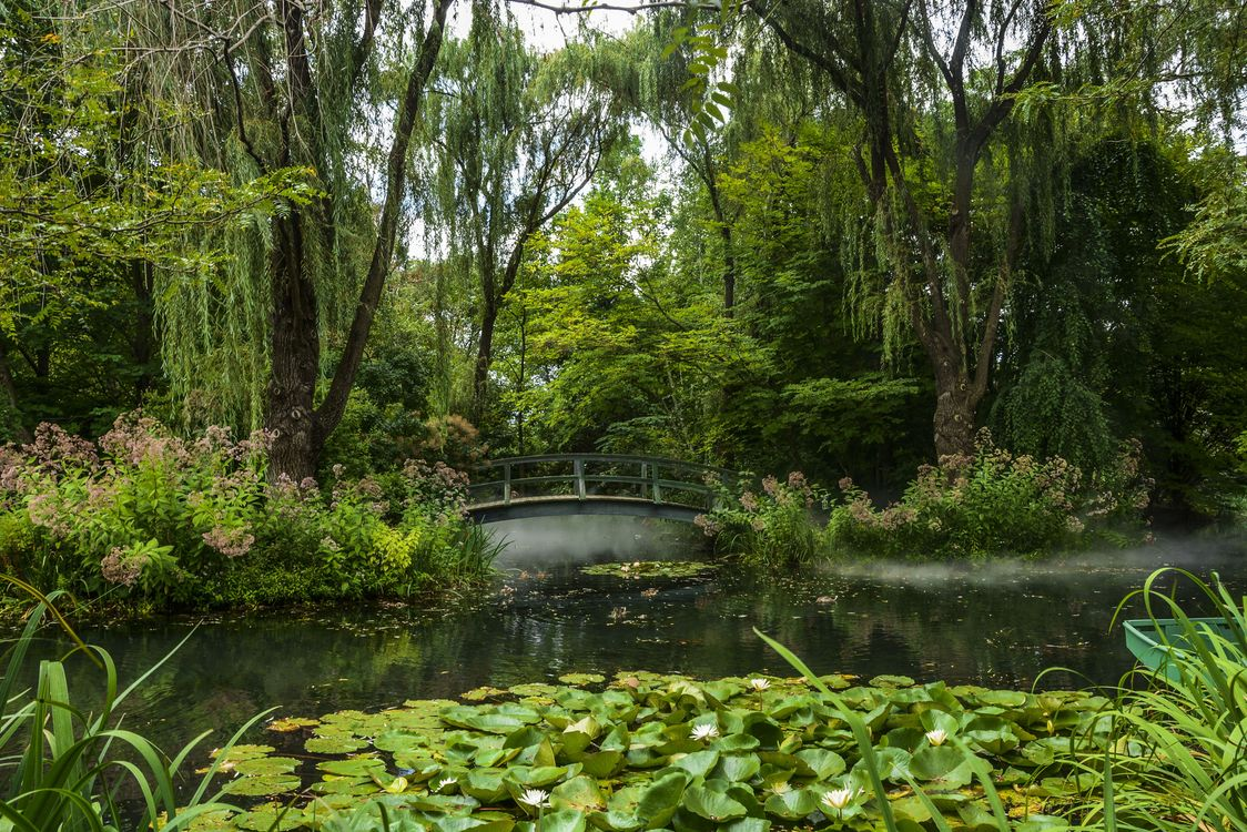 Фото бесплатно парк, водоём, мост, деревья, лилии, природа, пейзаж, пейзажи