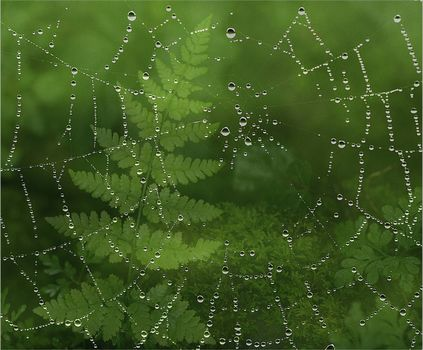 Заставки паутина, капли, роса, растения, макро