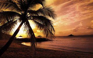 Бесплатные фото вечер,закат,тропики,берег,пальма,море